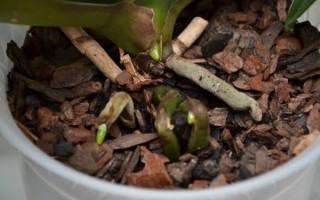 Земля для орхидеи