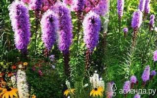 Цветы сверху вид