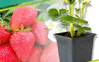Молочайные растения