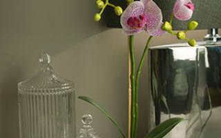 В какой горшок садить орхидею