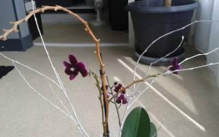 Нужно ли обрезать стебель орхидеи после цветения