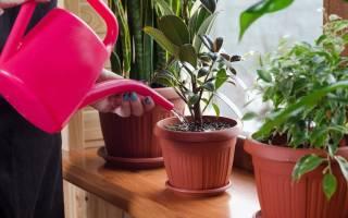 Как правильно подобрать удобрение для цветов