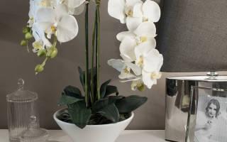 Чем подкормить орхидею чтобы зацвела