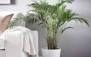 Грунт для пальм состав