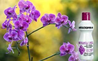 Как обработать орхидею фитоспорином