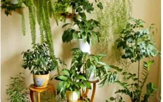 Подкормка для комнатных растений