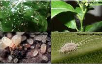 Мелкие белые жучки в почве комнатных растений