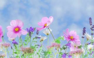 Факты о цветах