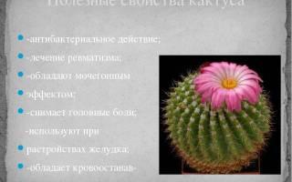 Сок кактуса